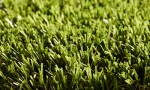 Lords Artificial Grass